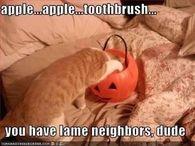 Lame Neighbors