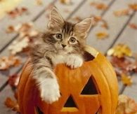 Cat in a Jack O Lantern