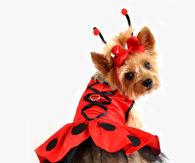 Doggy Ladybug Halloween Costume
