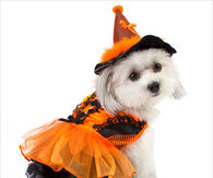 Cute Doggy Orange & Black Witch Costume
