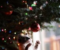 Kitty playing with christmas ornament