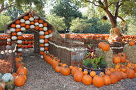 Dallas, TX Pumpkin Village at the Arboretum -2