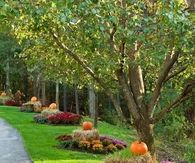 Beautiful Fall Landscaping