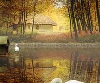 Swan Lake in Autumn