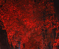 Red Autumn strip