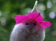 Flower Hat Makes Cute Hamster Even Cuter!