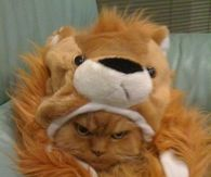 Cat doesn't like his Lion Costume