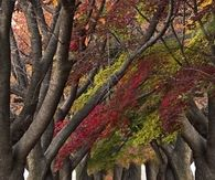 Twisted Autumn Trees