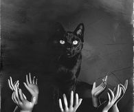Creepy Black Cat