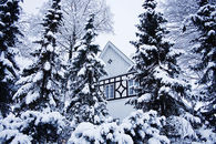 Snow trees and house