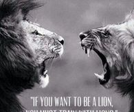 Train With Lions