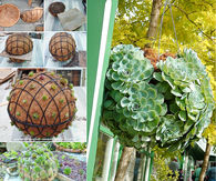 Create your own garden succulent ball