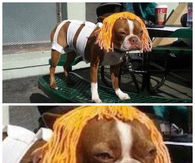 5th Element Dog