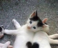 Hearts on Cats