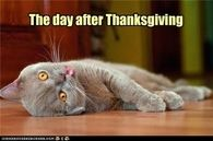 The Day After Thanksgiving