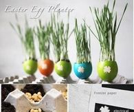 How to make an eggshell planters