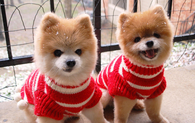 Christmas Puppy Outfits