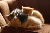 Adorable Sleeping Kitties