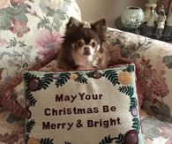 Dog with a message