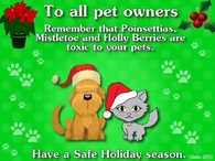 To All Pet Owners!  Poinsettias, Mistletoe & Holly are toxic to your Pets