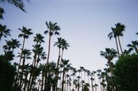 Cool Palm Trees