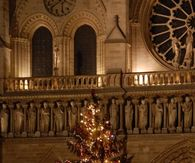 Christmas tree in Notre Dame
