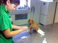 Dogs annual check up