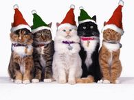 Cats with the Holiday spirit