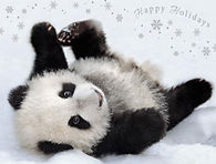 Happy Holidays from the Baby Panda