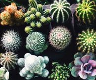 Variety of Cactus Plants