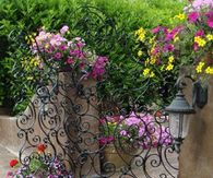 Wrought Iron Gate with Swirls