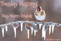 Tuesday Blessings Stay Warm