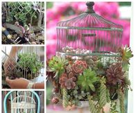 How to make a bird cage succulent planter