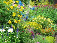 An English Cottage Garden in Full Summertime Bloom