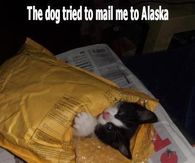 The dog tried to mail me