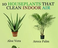 10 House Plants That Clean Air