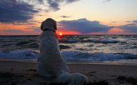 Dog enjoying Sunset on the beach