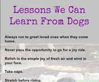 Lessons we can learn from dogs