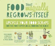 Foods that magically regrow