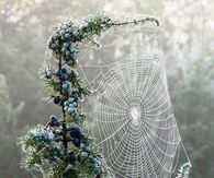 Spiderweb & Blueberries