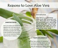 Reasons to love aloe vera