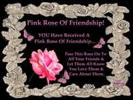Pink Rose of Friendship