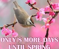 18 More Days Until Spring