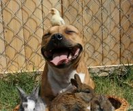 Adorable pitbull with animal friends