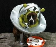Alien dog costume
