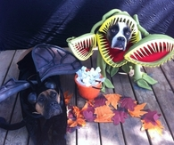 Venus fly trap and fly dog costumes
