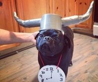 Flava Flav dog costume