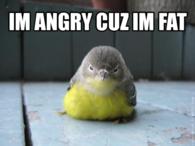 Im angry cuz im fat
