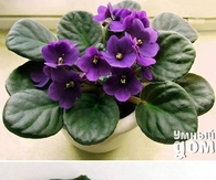 DIY Grow Violet Flowers