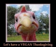 Lets have a vegan thanksgiving